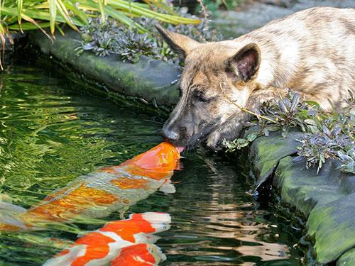 Những nụ hôn rực rỡ trong thế giới động vật-6