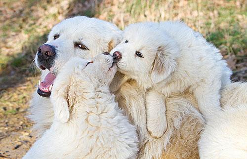Những nụ hôn rực rỡ trong thế giới động vật-7