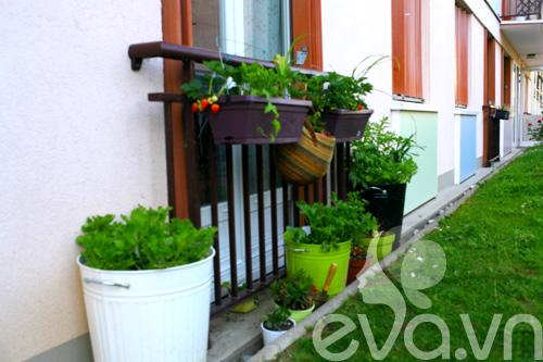 Cô chủ Việt khoe cách trồng dâu tại Pháp-12