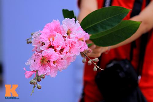 Ngắm vẻ đẹp bằng lăng hồng ở Hà Nội-14