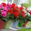 Nhà đẹp - 5 loài cây tuyệt thơm đáng trồng cho nhà nhỏ
