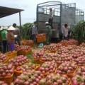 Mua sắm - Giá cả - Tránh bị động cho nông thủy sản xuất sang TQ
