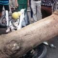Tin tức - Bình Định: Cây xanh bật gốc đè 3 người nguy kịch