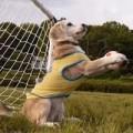 Clip Eva - Chú chó gây sốt với khả năng chơi bóng