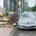 Tin tức - Mưa lốc dữ dội, cây bật gốc đè ô tô giữa Sài Gòn