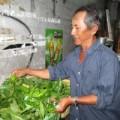 Tin tức - Rộ mốt ăn rau rừng tại TP.Hồ Chí Minh