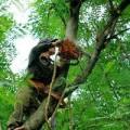 Tin tức - HN: Chặt tỉa cây xanh chống mưa, bão