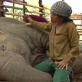 Người phụ nữ hát ru những chú voi