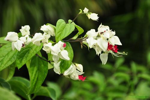 chon gian hoa leo dep cho nha pho - 8