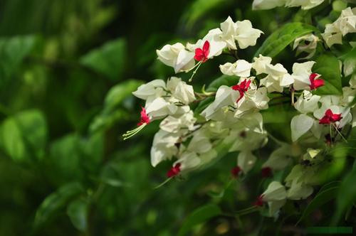 chon gian hoa leo dep cho nha pho - 10
