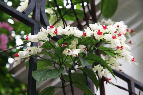 chon gian hoa leo dep cho nha pho - 9