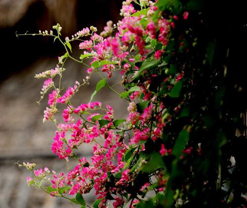 chon gian hoa leo dep cho nha pho - 3