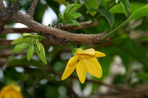 chon gian hoa leo dep cho nha pho - 11