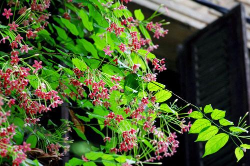 chon gian hoa leo dep cho nha pho - 14