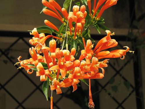 chon gian hoa leo dep cho nha pho - 15