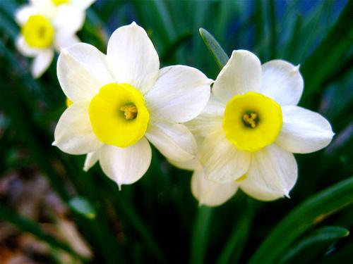 soi loai hoa dem lai may man cho 12 cung hoang dao - 9