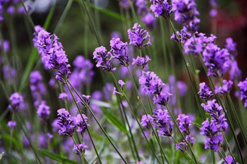 soi loai hoa dem lai may man cho 12 cung hoang dao - 3
