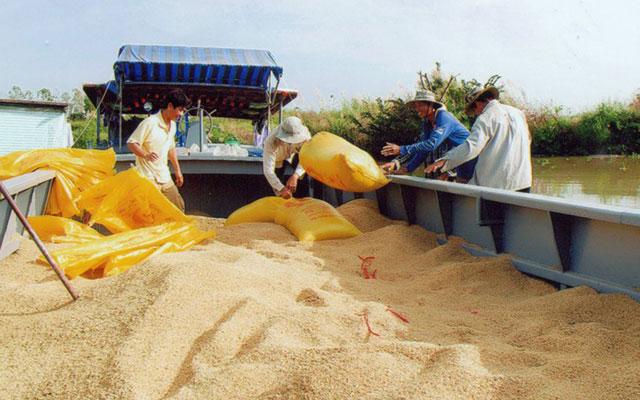 Xuất khẩu gạo sang TQ: Coi chừng sôi động giả-1