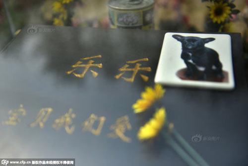 Nghĩa trang vật nuôi ở Bắc Kinh-1