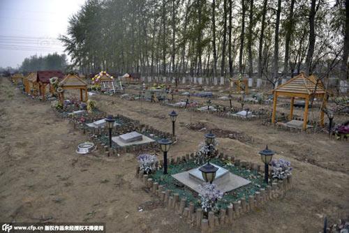 Nghĩa trang vật nuôi ở Bắc Kinh-11