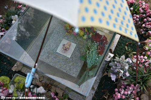 Nghĩa trang vật nuôi ở Bắc Kinh-3