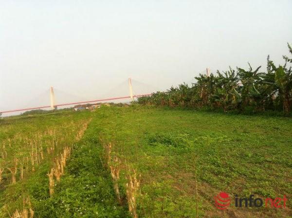 Lạ: Dịch vụ cho thuê đất trồng rau sạch ở HN-1
