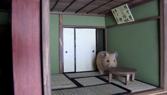 bat cuoi voi nha nhat ban cua 'chang' hamster beo - 2