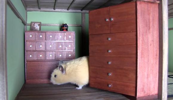 bat cuoi voi nha nhat ban cua 'chang' hamster beo - 5
