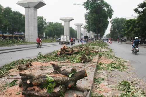 Thanh tra công bố các sai phạm vụ chặt cây xanh Hà Nội - 1