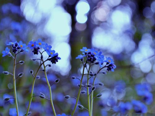 Nàng trồng hoa 'Xin đừng quên em' mong tình yêu chung thủy-3