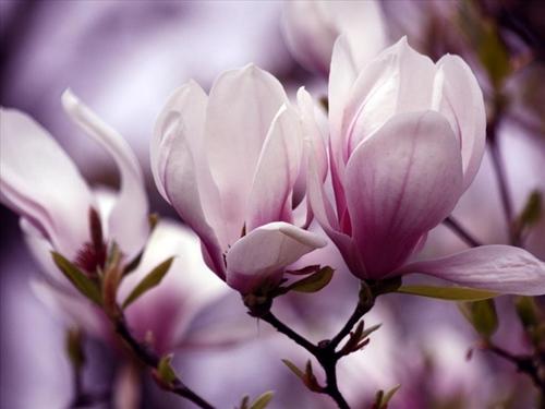 diẽm my 9x quyen ru tuyet tran voi hoa mọc lan - 1