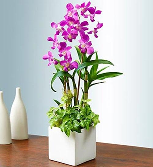 6 loài hoa đẹp thích hợp trồng ngày hè-1