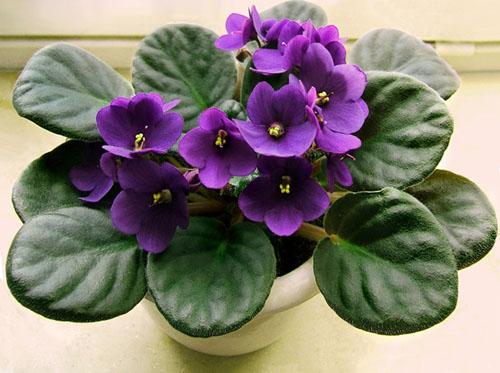 6 loài hoa đẹp thích hợp trồng ngày hè-2