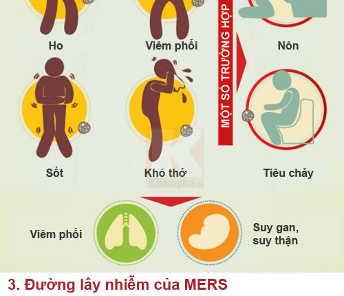 infographic: nhung su that dang so ve mers-cov - 3