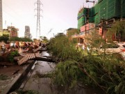 Tin trong nước - Hà Nội lên phương án ứng phó cây đổ khi mưa bão