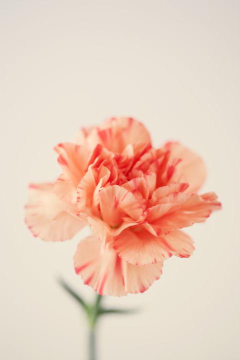 bat ngo y nghia 9 loai hoa pho bien - 3