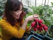 Ngắm để thèm - Mẹ bận kinh doanh vẫn trồng rau sạch cho chồng con xơi