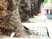 Tin tức - TPHCM: Cắt điện nước 10 ngày để bứng 2 cây cổ thụ
