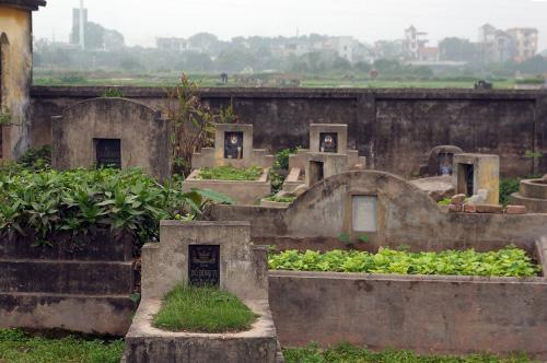 Rùng mình rau xanh trồng trên nghĩa địa ở Hà Nội-2
