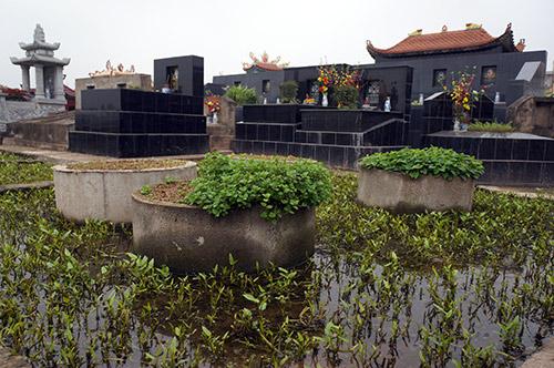 Rùng mình rau xanh trồng trên nghĩa địa ở Hà Nội-3