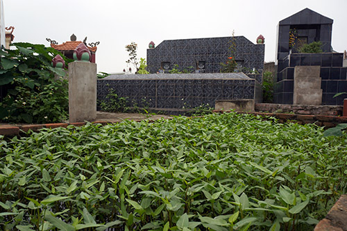 Rùng mình rau xanh trồng trên nghĩa địa ở Hà Nội-5