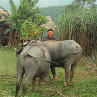"hanh trinh ""tra no doi"" cua vo chong ty phu mot thoi la... lam tac - 2"