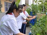Y tế - TP.HCM tăng cường phòng chống virus Zika trong trường học