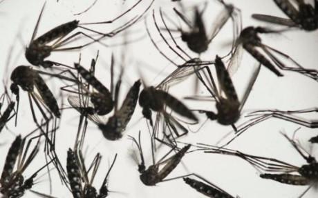 nguoi lon dang khoe manh co the roi loan than kinh neu nhiem virut zika - 1