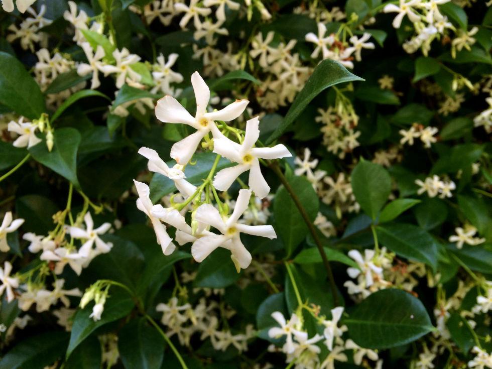 loai hoa may man cho 12 cung hoang dao - 4