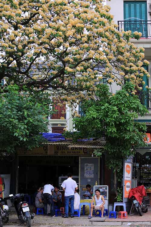 Ngắm cây hoa bún có 2 màu hoa ở Hà Nội-12