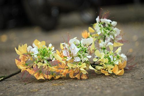 Ngắm cây hoa bún có 2 màu hoa ở Hà Nội-10