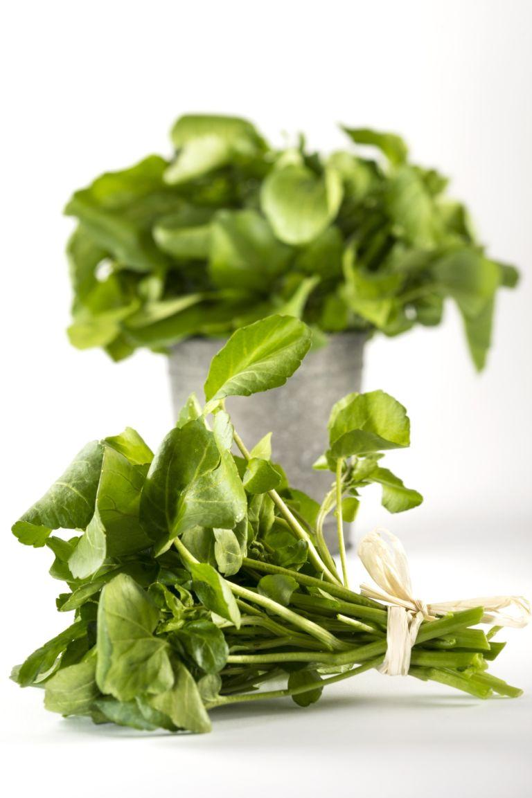 Trồng 'siêu thực phẩm' rau mầm cải xoong ngừa ung thư-1