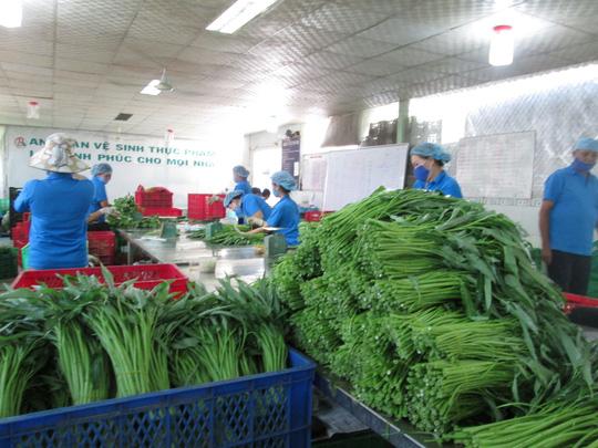 TP HCM sẽ quản lý thực phẩm từ gốc đến ngọn-1