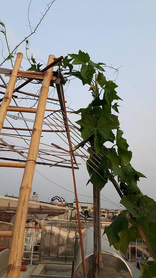 ba ngoai tuoi 50 do mai ton, xay luong trong rau san thuong - 4